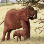 アフリカX【アフリカ×自然動物】